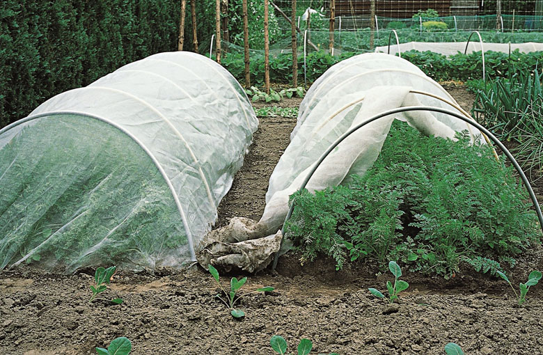 Insect nets - vegetable cover